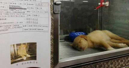 台灣這間連鎖寵物店宣布不再販售貓狗,並且將櫥窗用來展示流浪動物!