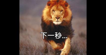 攝影師冒著只有「3公尺」的生命危險,拍下每個獵物被獅子殺死前看到的最後一幕。