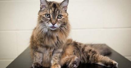 貓咪呼嚕聲超可愛,但這隻貓咪的世界最大「呼嚕聲」大聲到連火車開過你都會聽不到!
