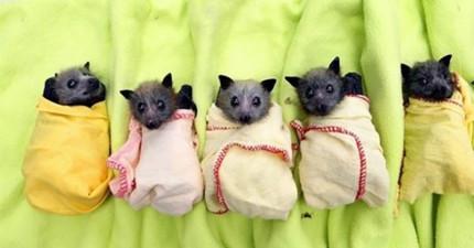 17個理由為什麼怕蝙蝠的人根本就搞不清楚狀況!