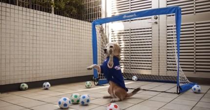 這隻守門員狗狗不僅成功地多次守著球門,也完全把可愛踢進了我的心...!