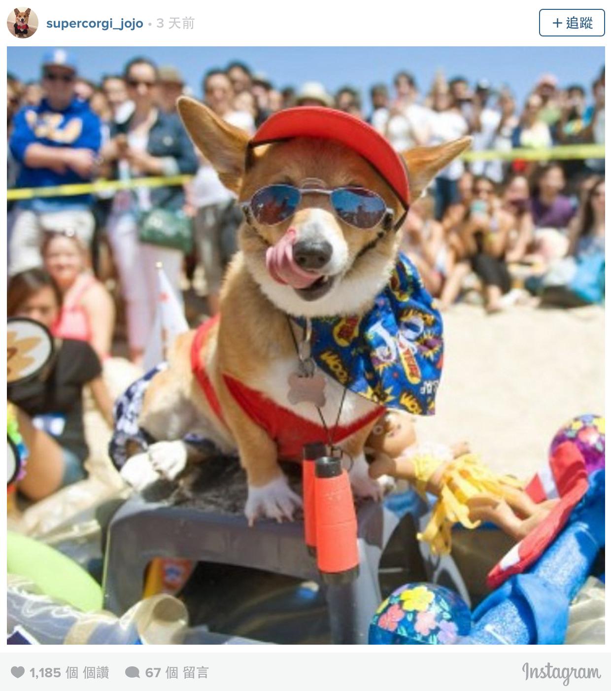 500隻柯基齊聚「柯基海灘派對」同樂,太誇張的可愛炸得我體無完膚啊!