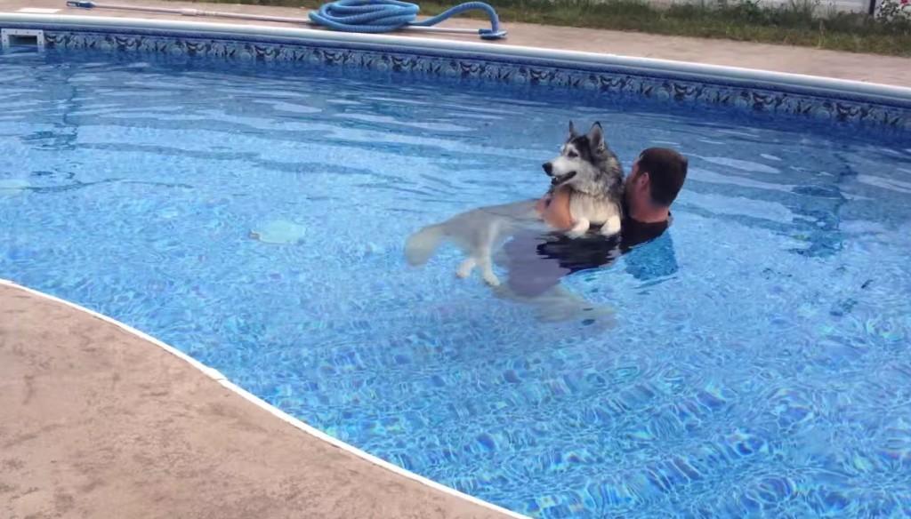 在他每天抱著年邁不能走路的老哈士奇游泳後,最不可思議的奇蹟就發生了。