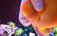 我沒有看錯吧?!這隻魚以為自己是一隻狗,而且還有一些魚不可能有的習慣!