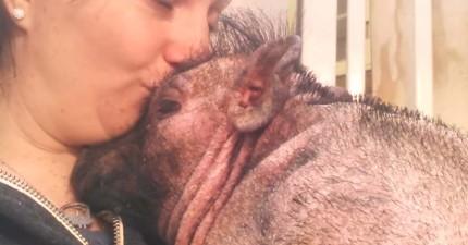 獸醫陣陣的噪音她渾身病痛的小豬很惶恐,但她溫柔安撫小豬的方法讓我快噴出淚了...