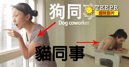 如果你同事的性格跟狗和貓一樣的話,辦公室就會發生這麼爆笑的事情。