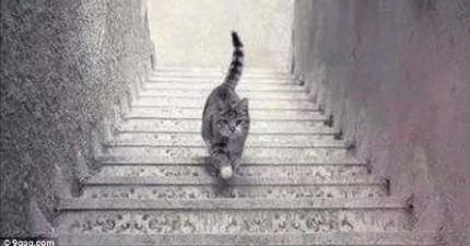 別管那件洋裝了!這隻貓咪到底是在上樓還是在下樓?!