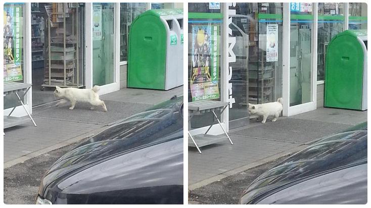 不管怎樣,在此還是要奉勸所有貓咪,想要闖便利商店,還是要帶錢喔!