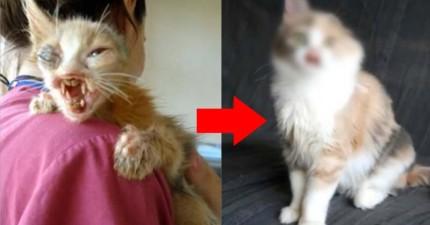 7歲小女孩毫不猶豫救了這隻面目全非的貓咪,後來她的舉動讓大人都好生欽佩!