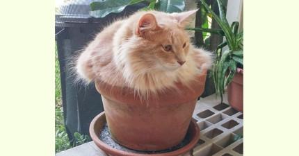 20個你絕對不能澆水的超可愛「貓咪盆栽」...!