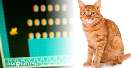 這隻貓咪只要一聽到瑪莉歐跳起來的聲音就會做出會讓你笑到喘不過氣的事情。
