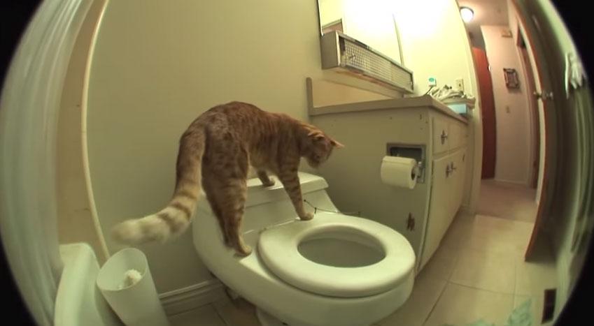 這隻貓咪爬上了馬桶然後...OMG這讓我好感動啊!