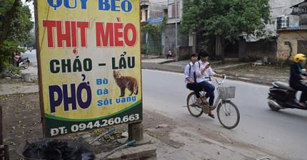 這就是為什麼在越南河內幾乎看不見流浪貓的原因...