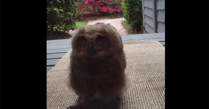 這些人一開家門,就發現外頭有隻「毛茸茸」到不行的超萌訪客就這樣一直看著她們!