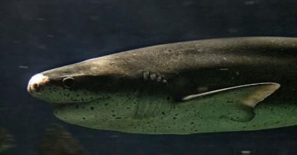這名男子擊退鯊魚、自己縫合腿傷、然後就去喝酒了...什麼鬼?!