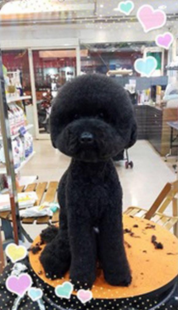 看什麼啊?沒見過有幾何形狀的狗狗造型嗎?