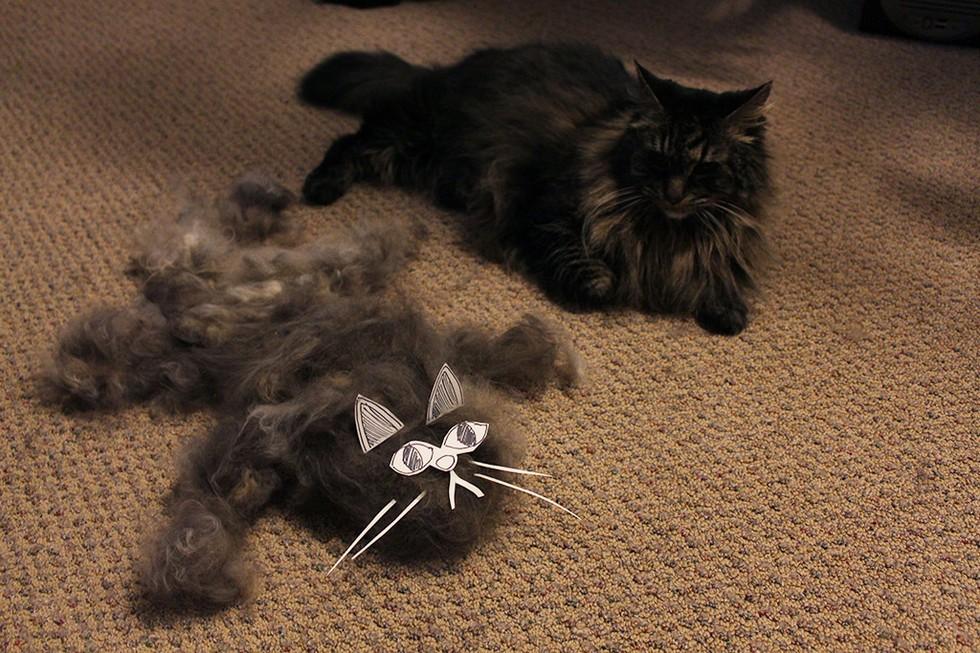 這13個主人梳貓咪梳到一半,發現到旁邊梳出了另一隻貓咪!