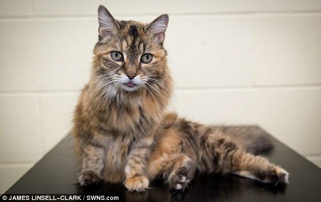 这样惊人的呼噜声,音量也是一般猫咪的4倍,也让其他动物晚上被吵醒。虽然她的呼噜声很惊人,但她可是很友善又很可爱呢!