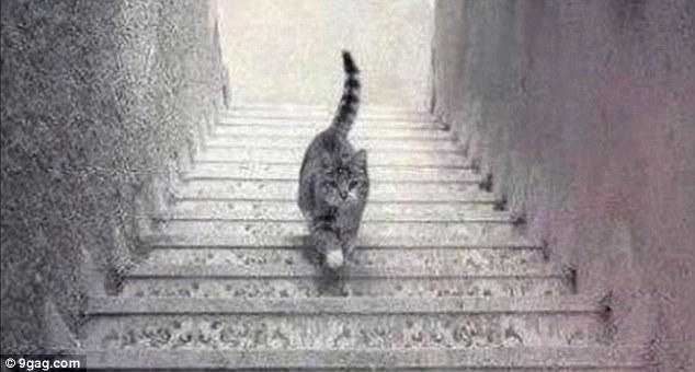 你大概也看过之前那个闹得满城风雨、妻离子散的洋装 (连结),到底是白金色、还是蓝黑色,几乎已经是全人类最大的战争之一。但现在,忘了那万恶的洋装吧!来看看这只不知道到底是上楼还是下楼的猫咪!