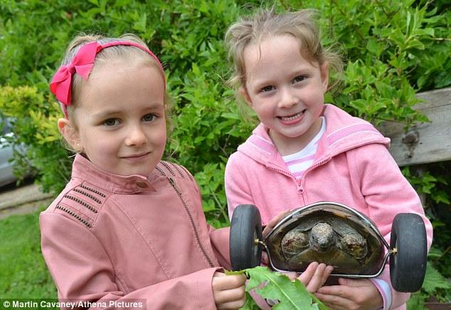 Ms Ryder's grandchildren Nancy Sinclair-Jones, four, (left) and Mia Davies, five, with Mrs T the tortoise