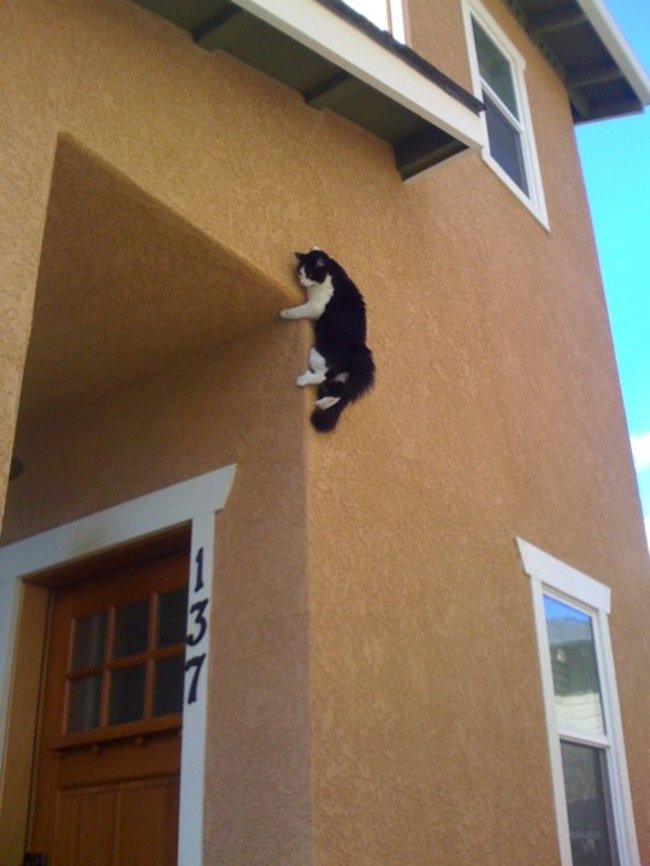 29個找到最棒的地方睡覺的「躲貓貓」。
