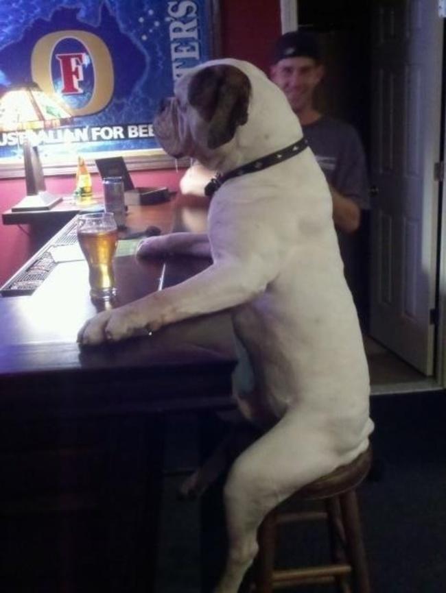 26隻已經搞懂要怎麼活得比你還要開心的超爽狗狗。
