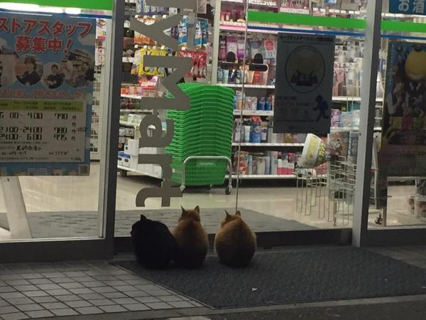 現在,他們更研發出了一個奇怪的習慣,而且還是被大批大批的民眾給拍到。那就是:「在 便 利 商 店 門 口 超 有 禮 貌 地 等 著 。」
