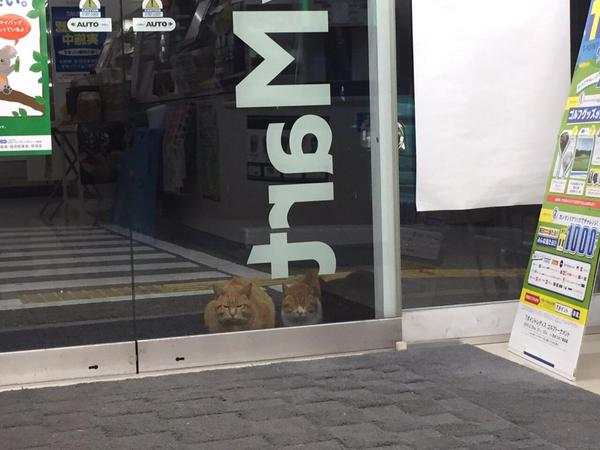 日本超商遭喵星球侵略!所有貓咪「圍攻店門口」等吃 有些直接闖進去了~