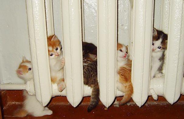 25隻超熱愛溫暖的怕冷小動物,看完後會讓你突然感到很幸福!