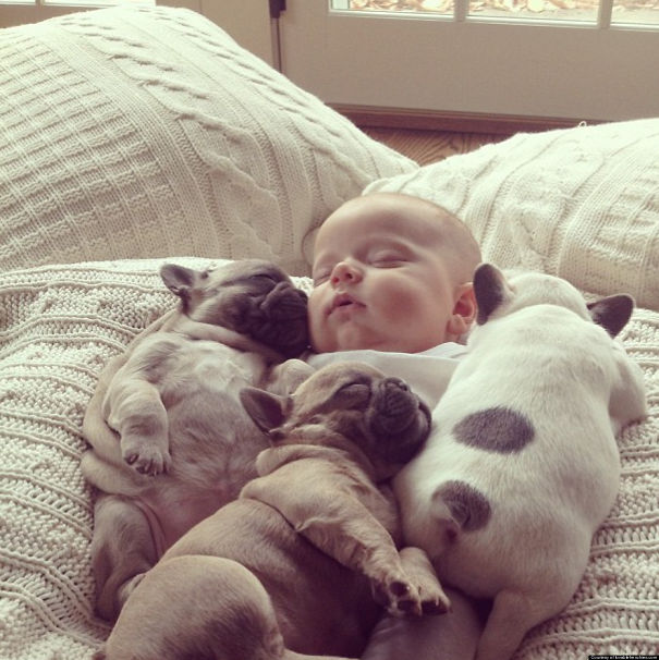 Bulldog Puppies And A Baby