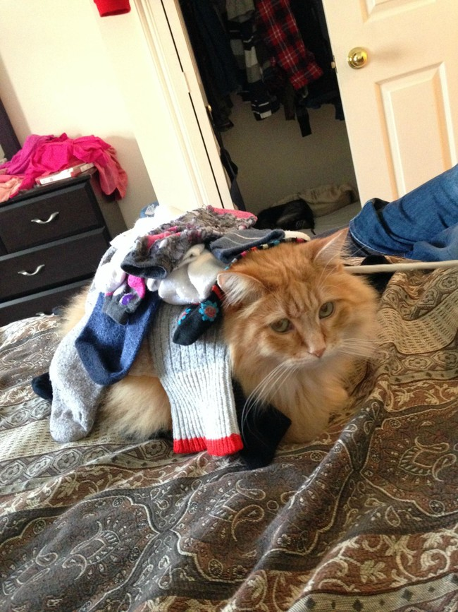 """This is your idea of putting the laundry away?"""