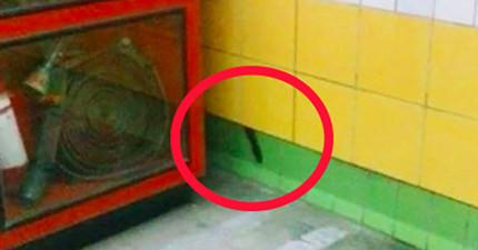 5年來,車站內的牆後夾著一隻動彈不得的貓咪,但是他到底怎麼活過這5年?