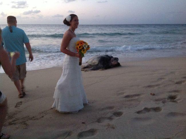 """Listen, lady, <em>you're</em> the one who wanted a beach wedding."""