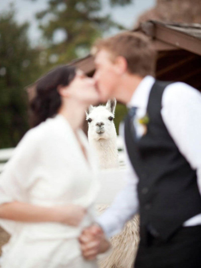 """""""Is now a bad time to tell you I pooped in the wedding barn?"""""""
