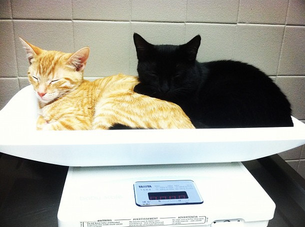 The vet's office isn't so bad when you've got a buddy...