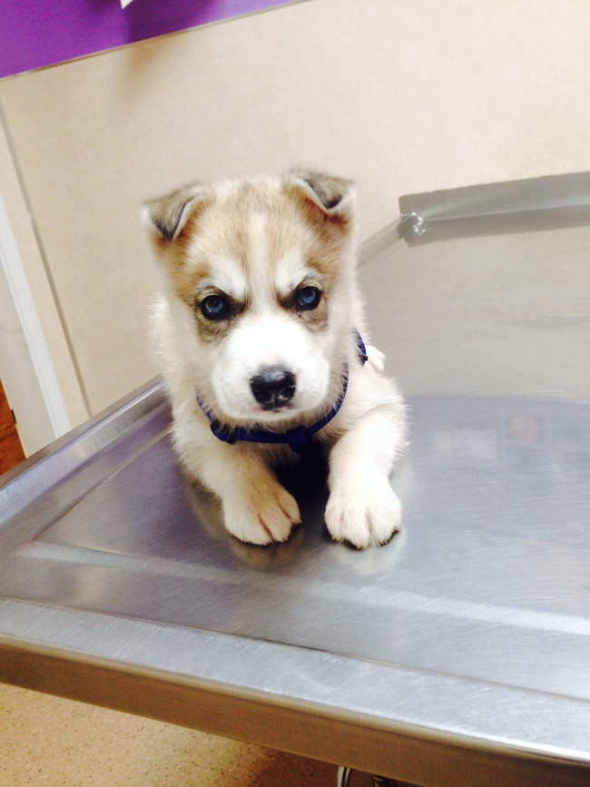 """""""You know I hate it when you take pictures of me at the vet. The lighting is all wrong."""""""