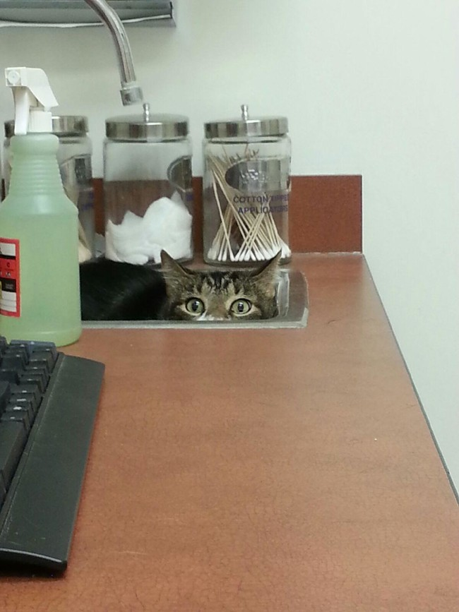 """""""I AM the sink. No doctor will find me here!"""""""
