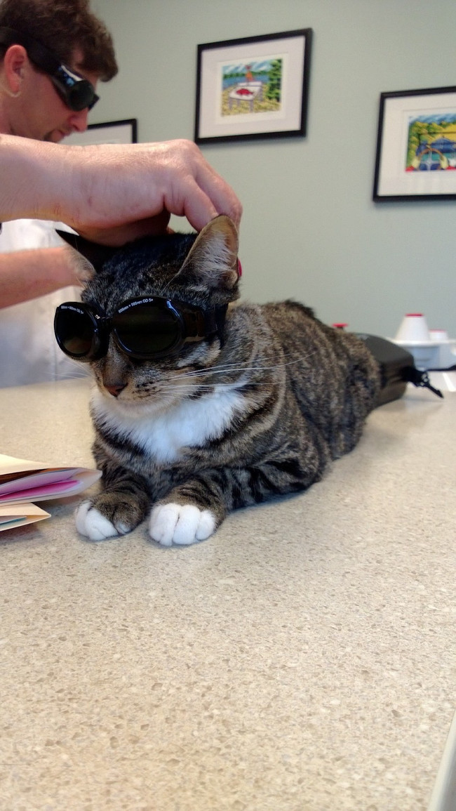 Too cool for school (or the vet).