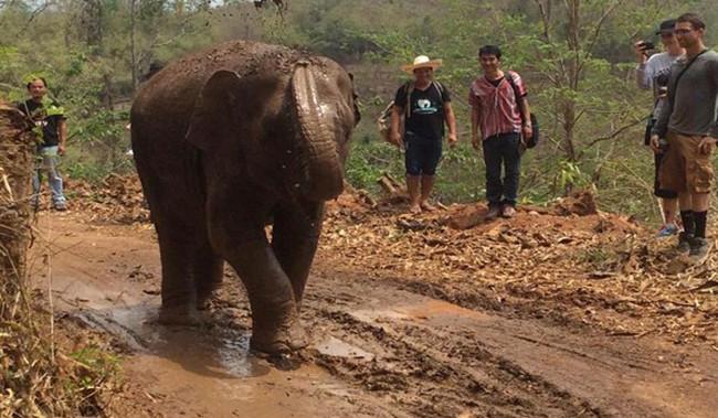 看完這對大象母女散失多年的故事,會讓你再也不騎大象了!