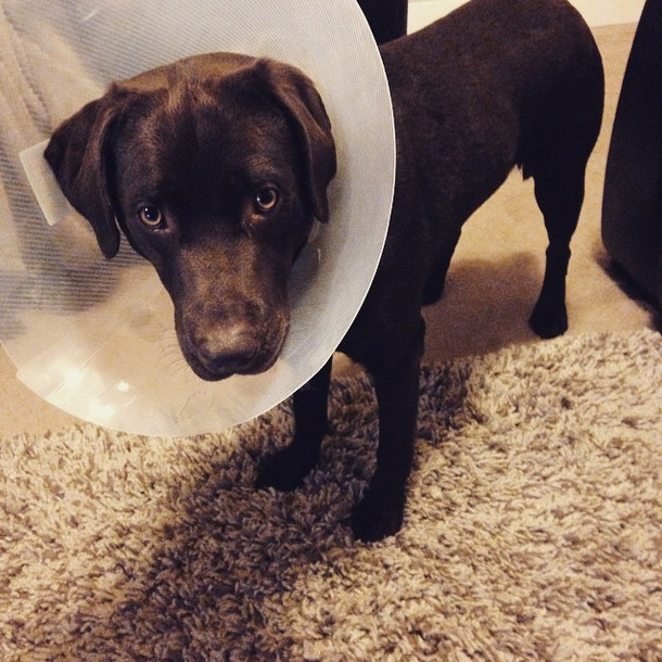 There's really no shame in the cone of shame, ironically.