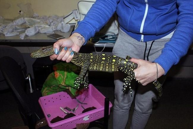 俄羅斯海關人員在女子的行李箱裡驚見一整個活的「動物園」!...怎麼還有一隻豹?!