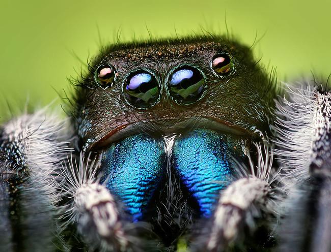 16個曾在人體中發現的驚悚生物,看完讓我渾身發癢啊!
