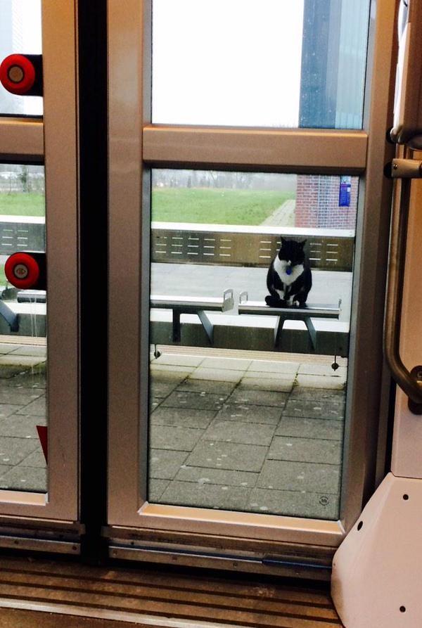 這隻貓10年來無論風吹日曬天天都到車站報到,竟然成了萌殺眾人的大明星!