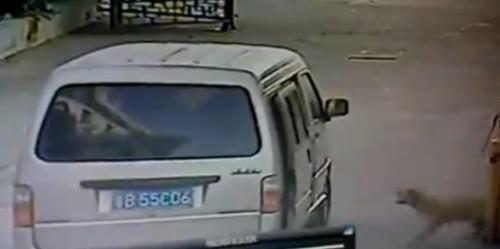 養狗狗的人小心!這台監視器拍下的恐怖片段會讓你看到整個難以防範的偷狗犯罪過程!