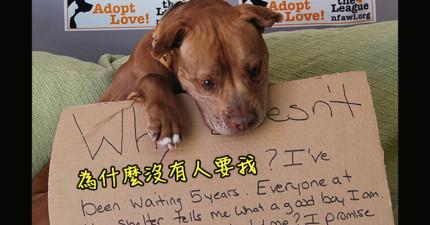 這隻狗狗等了5年都沒有被人領養...於是收容所拍了這張讓全世界都很心疼的照片!
