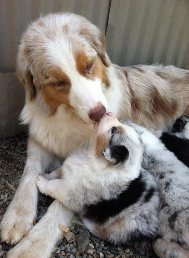 23個友情好到連點心都會讓給對方的狗狗麻吉。