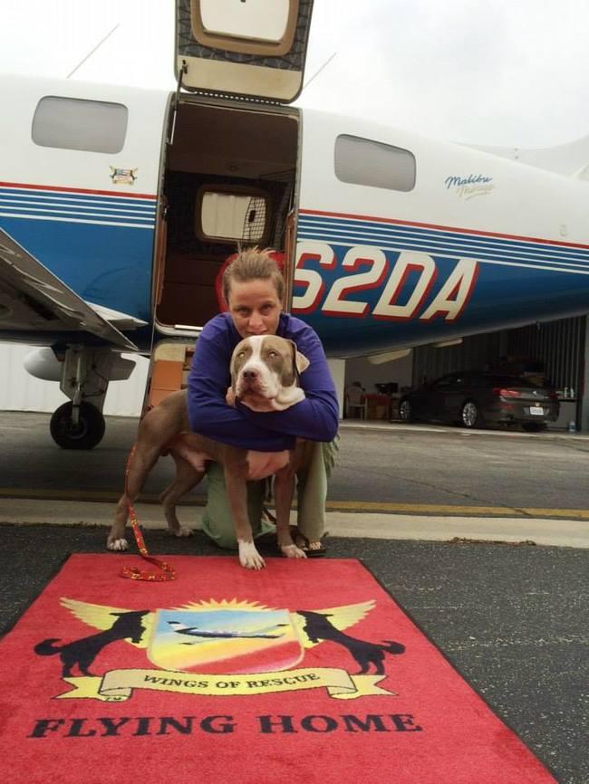 一隻隻狗狗全都坐上飛機翱翔空中,背後是動人的12000隻動物救援愛心!