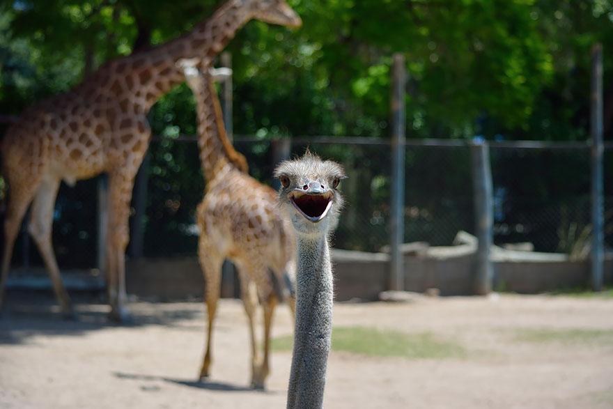 Funny Animal Photobombs