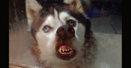 20隻正在舔玻璃的動物...完全不知道人類在另外一面已經笑到快斷氣了!