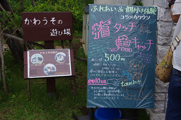 日本這間海洋公園讓你跟這些超可愛小水獺牽手。我現在就需要買機票去!